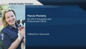 Marcie Moriarty of BC SPCA on Des Hague's trial